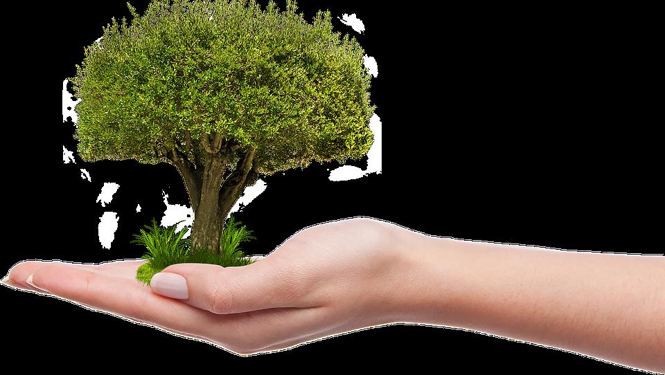 Planton un arbre recyclage Tungstène